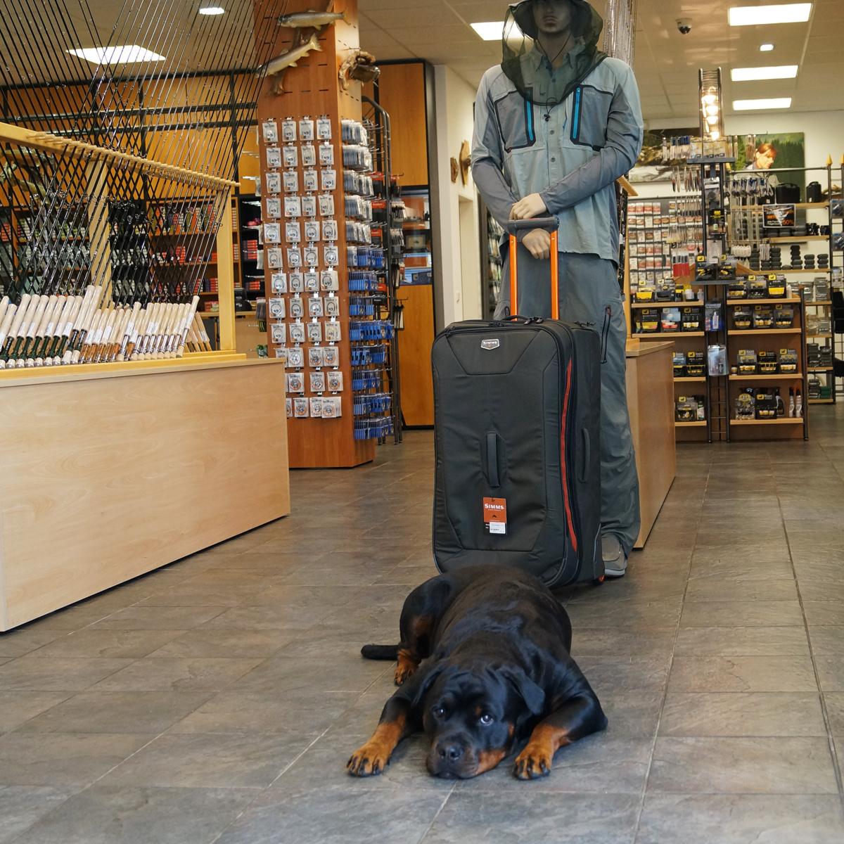 Hund im Angelgeschäft