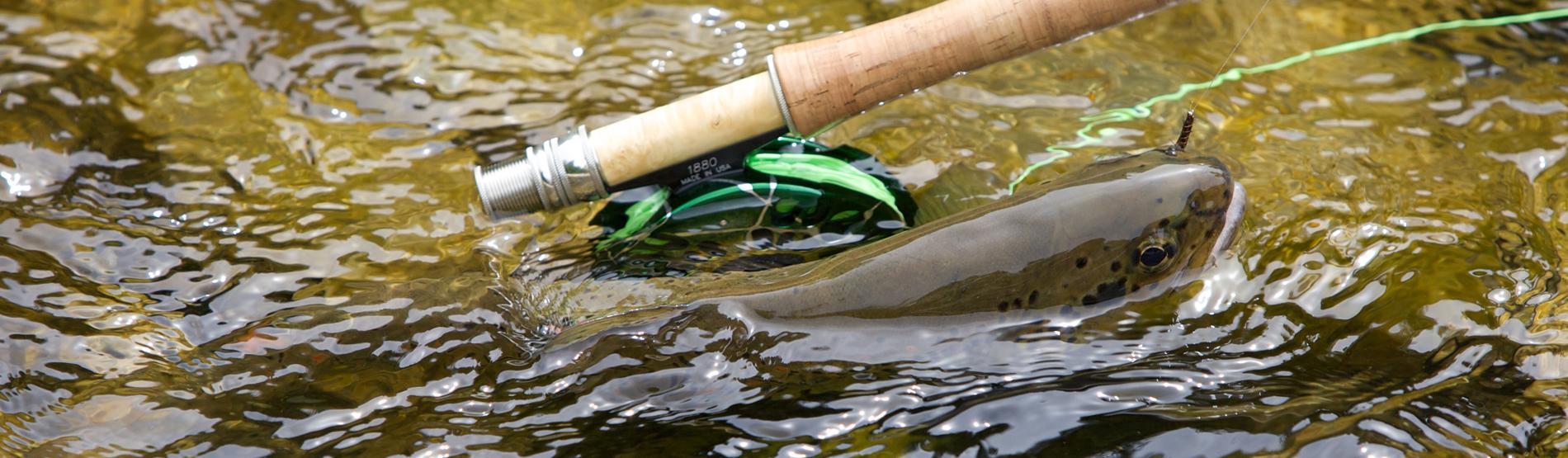 Forelle und Fliegenrute im Fluss