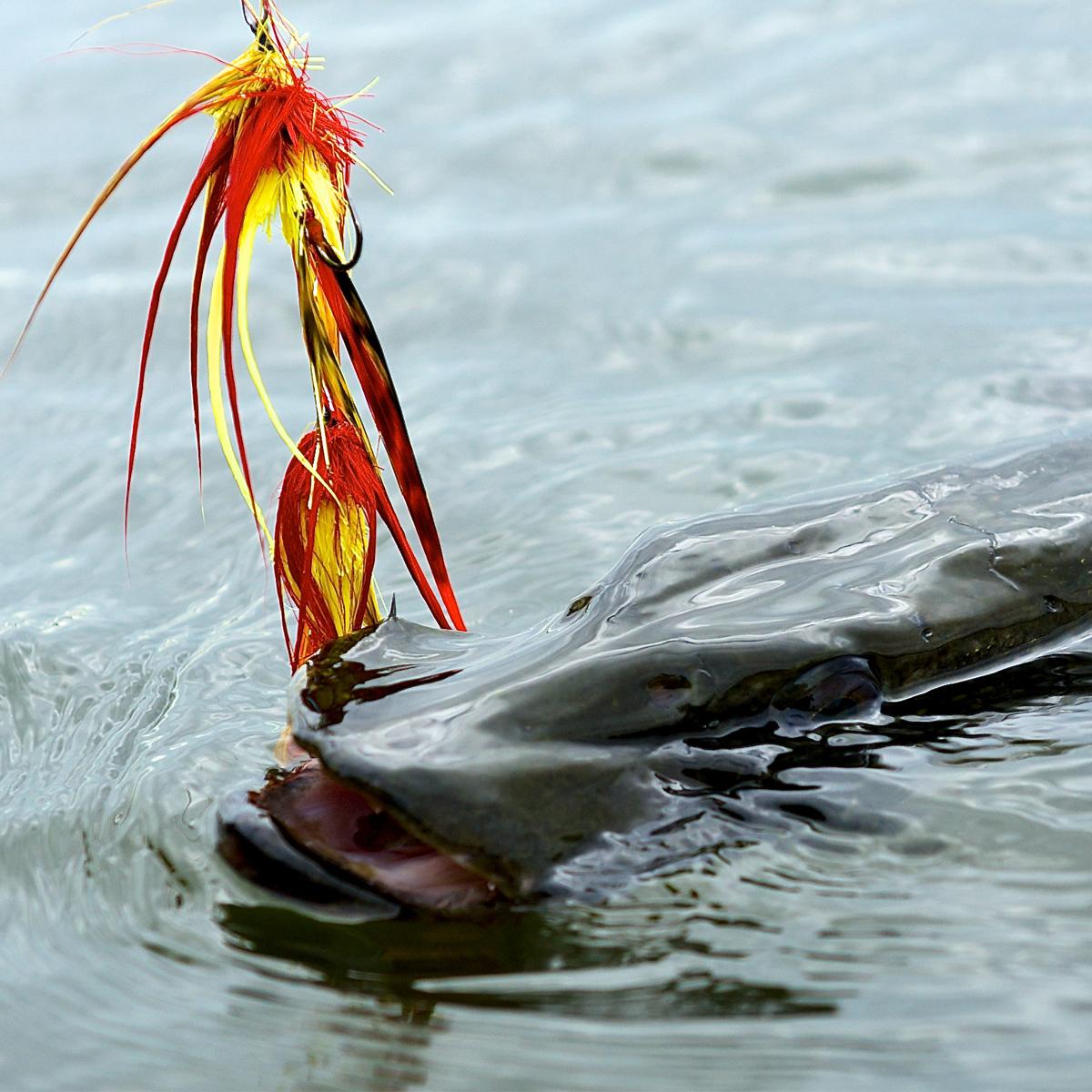 Fliegenfischen auf Hecht am Möhnesee