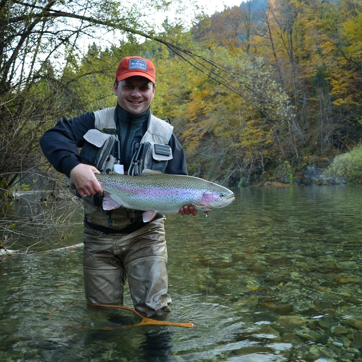Schöne Regenbogenforelle aus Slowenien