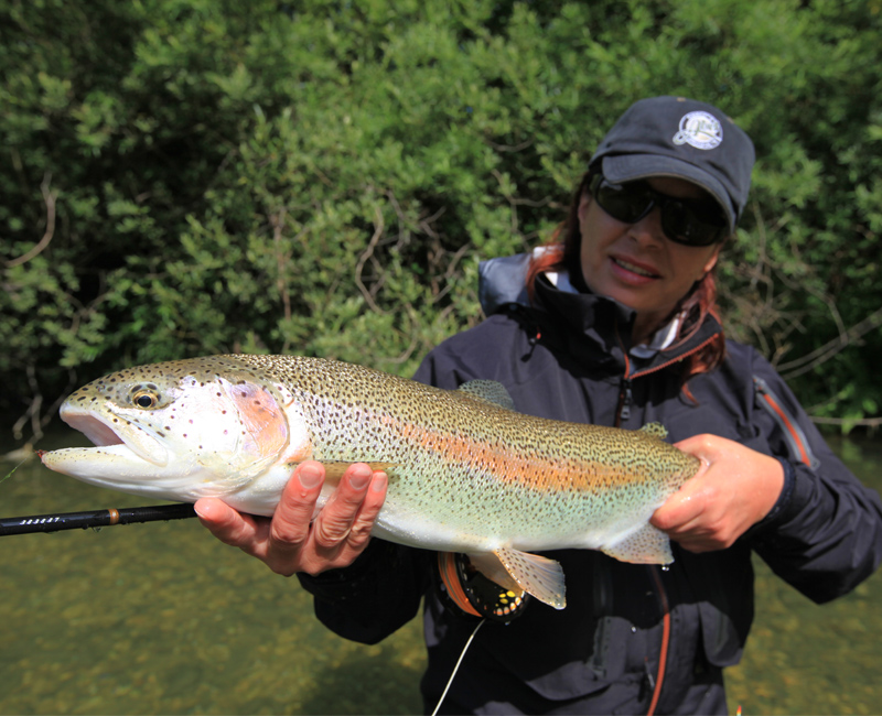Regenbogenforelle beim Fliegenfischen in Slowenien