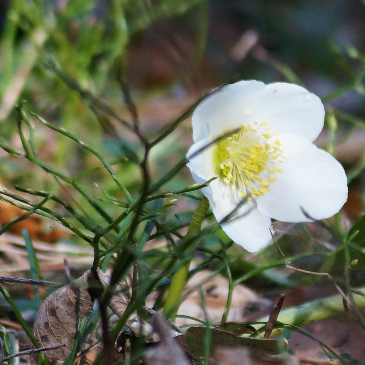 Blumen an der Savinja