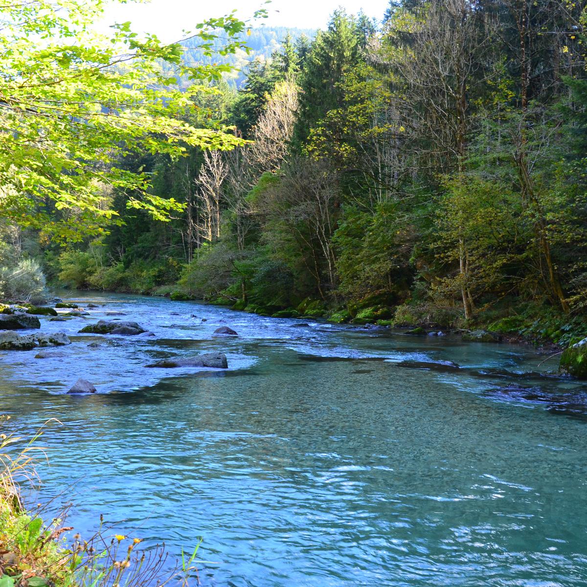 Fliegenfischer-Fluss Savinja in Slowenien