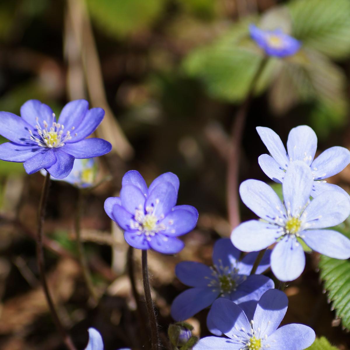Blumen am Ufer der Savinja